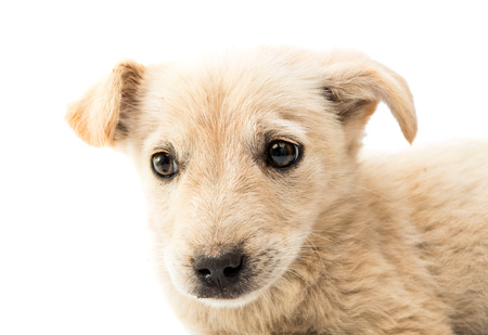 sniff dog: homeless puppy on a white background