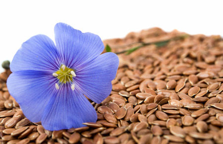 gold flax: Blue flax flower with seeds isolated on white background