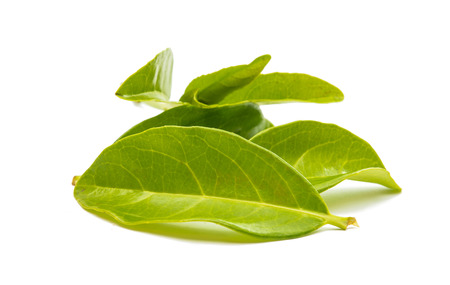 thea: Green tea leaves isolated on white background Stock Photo