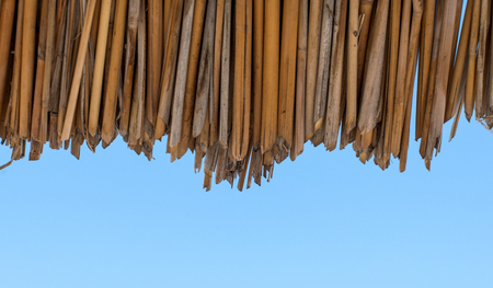 canne: background of dried reeds