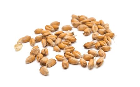 wheat grain: Wheat grain on a white background