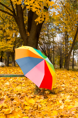 Colorful umbrella lying on yellow leafs in autumn day