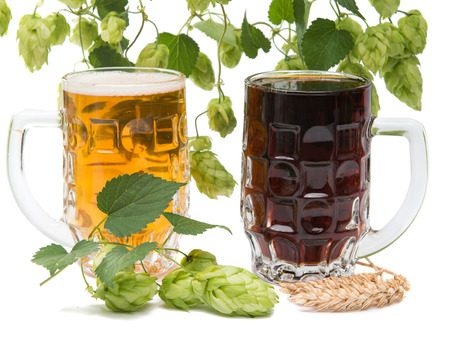 Beer glasses with hop cones on white background