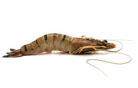 tiger shrimp: tiger shrimp on white background Stock Photo