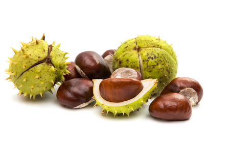 horse chestnut seed: fruit chestnut on a white background Stock Photo