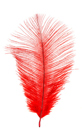 color feather on a white background Stock Photo