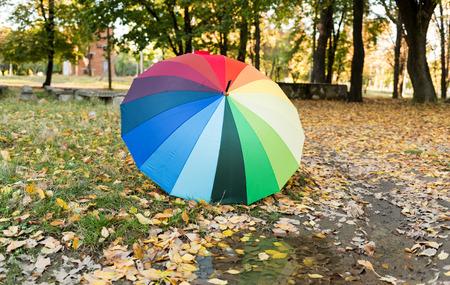 calendario octubre: paraguas de colores en otoño deja en el parque