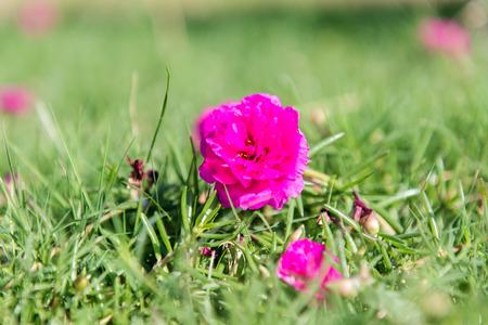 petites fleurs: petites fleurs dans l'herbe verte