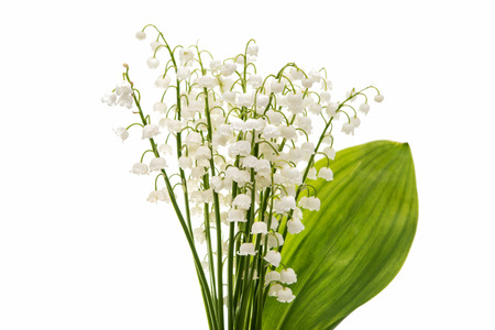 Flower lily of the valley isolated on white background Stock Photo
