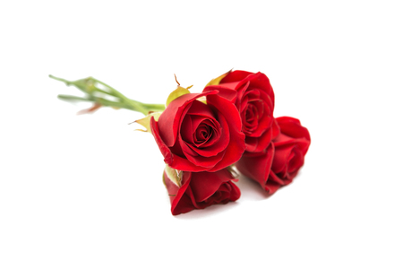 roze: beautiful red rose on a white background