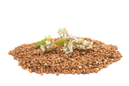 processed grains: the buckwheat flower photographed by a close up lying on buckwheat grains