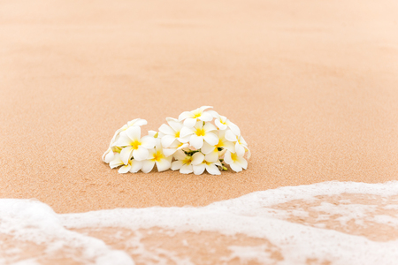 White Plumeria (frangipani) flower on sunny beach sand. Tropical relaxing vacation and spa background. Soft focus.
