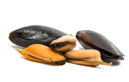 Mussels isolated on white background Reklamní fotografie