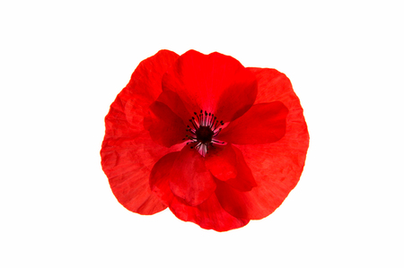 Beautiful red poppy isolated on white background Stock Photo