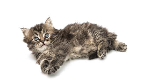 Small fluffy kitten isolated on white background Reklamní fotografie