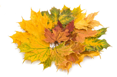 calendario noviembre: autumn leaves isolated on white background