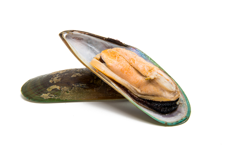 large mussels isolated on white background Stock Photo