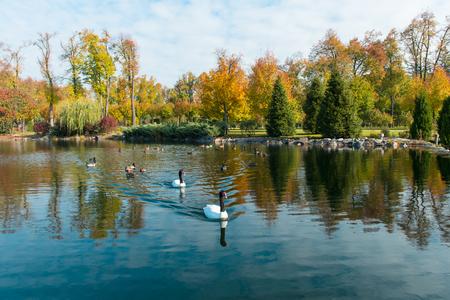 Autumn landscape of a pond