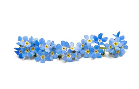 blauwe vergeet-mij-nietjes die op witte achtergrond worden geïsoleerd