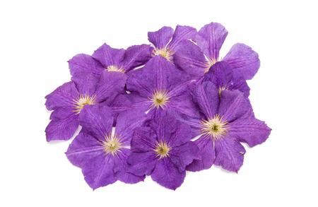 lavendar clematis flower on white background