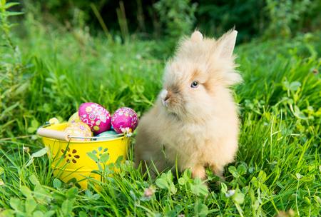 кролик весной в зеленой траве