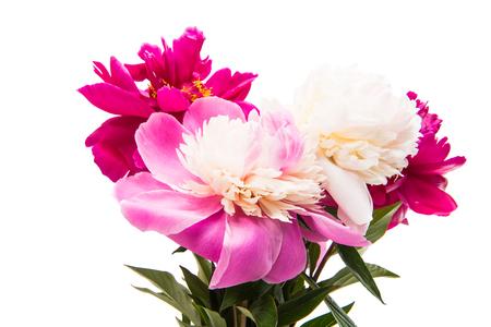цветок пиона, изолированных на белом фоне