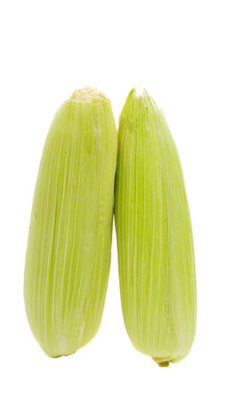 Corn cobs isolated on a white background 스톡 콘텐츠
