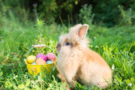 Easter bunny in green grass in spring