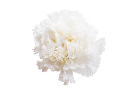 white carnation isolated on white background