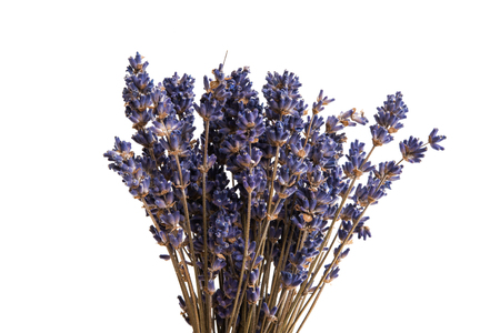 dry lavender isolated on white background