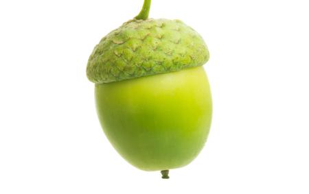 Bellota verde aislado sobre fondo blanco.