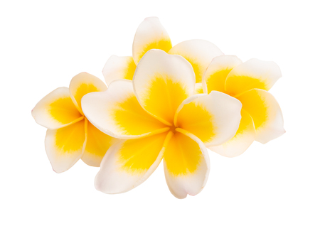 frangipani isolated on white background Banque d'images