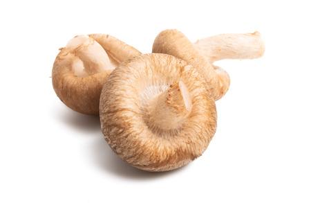 shiitake mushrooms isolated on white background 版權商用圖片