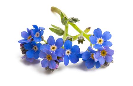 bloem geïsoleerd op een witte achtergrond Stockfoto