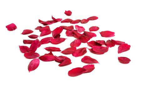 red sakura flower isolated on white background