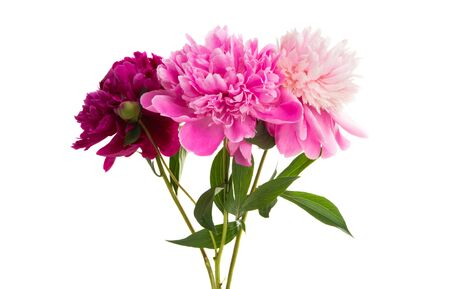 bouquet of peonies isolated on white background 免版税图像