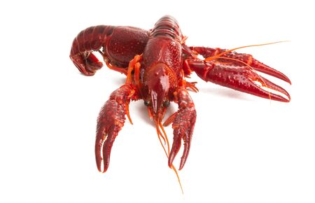 lobster isolated on white background Stockfoto