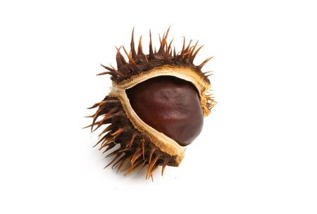 dry chestnut isolated on white background
