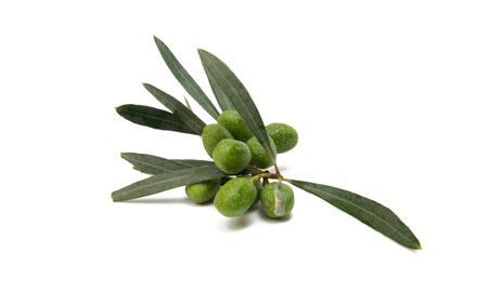 branch with olives isolated on white background Stok Fotoğraf