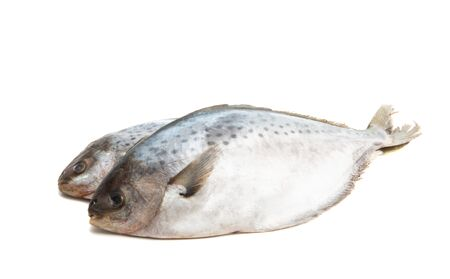 butterfish isolated on white background