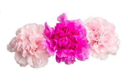 kwiat goździka na białym tle