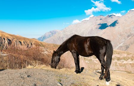 horse grazing in the mountains of Georgia in autumn