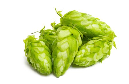 hop cones isolated on white background Foto de archivo - 133489767
