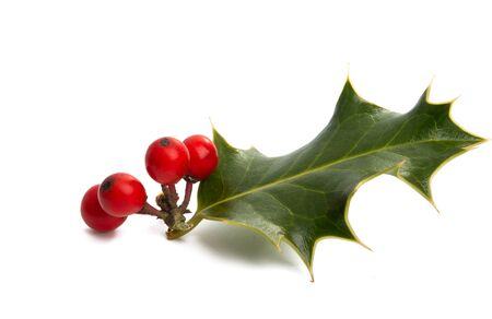 holly isolated on white background