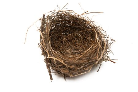nido di uccello isolato su sfondo bianco