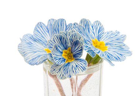 primrose flower isolated on white background