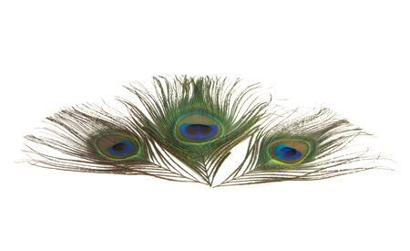 peacock feather with eye isolated on white background Stock Photo