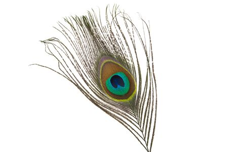 peacock feather with eye isolated on white background Stockfoto