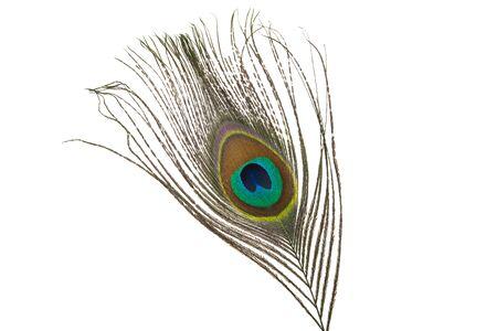 Pluma de pavo real con ojo aislado sobre fondo blanco. Foto de archivo