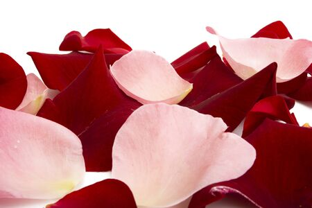 rose petals isolated on white background Stock fotó